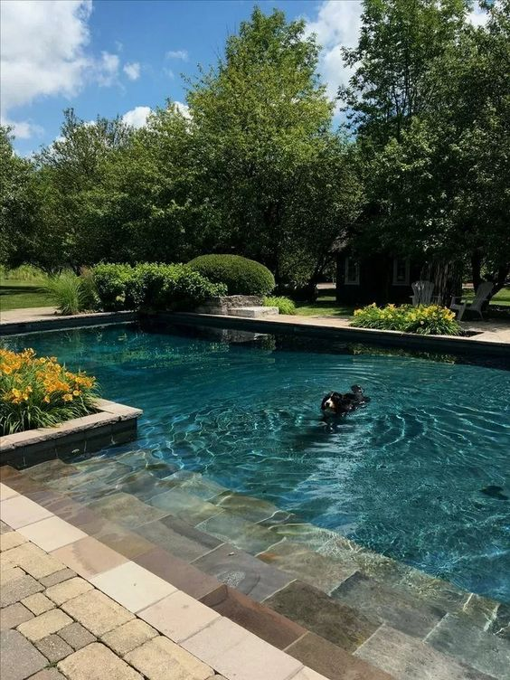 backyard with pools ideas 14
