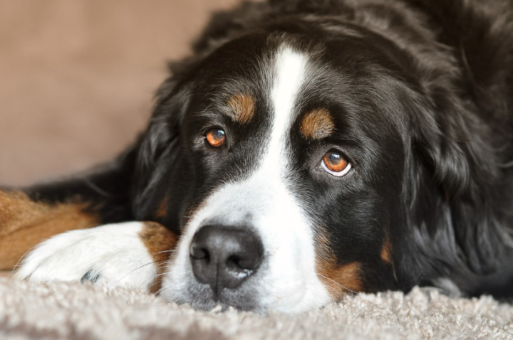 3 Tips for Owning a Big Dog in a Small Space